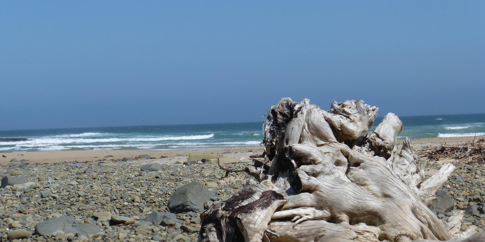 Holz am Meer